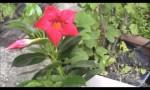 2013/5/29開催 「赤い花プロジェクト!」byサントリーフラワーズ
